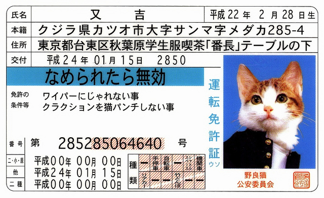 Japanese cat driver's license